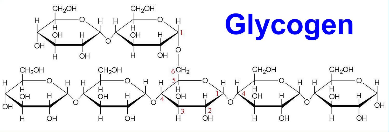 glycogen-structure