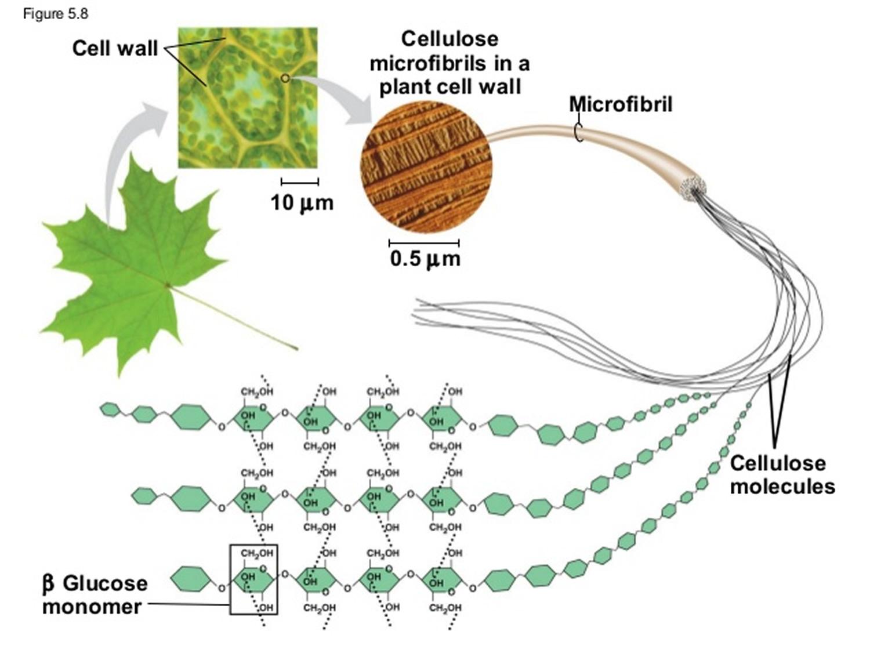 fiber cellulose structure