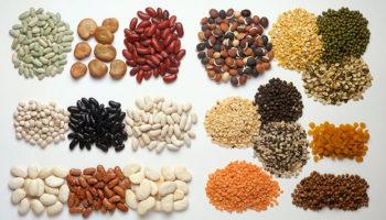 sumber-protein-nabati